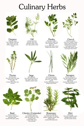 culinary-herb-poster